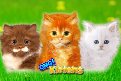 New Levels of Cuteness with OMG Kittens Slot